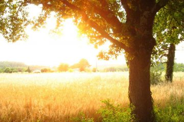 Trouver un bon camping nature en Dordogne